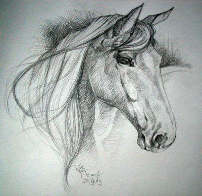 Pencil животные карандашом horse head study
